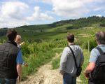 Verzicht Barolo wijngaarden 3