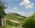Verzicht Barolo wijngaarden 4