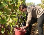 Druivenpluk bij Laurent Marthouret (St-Joseph)